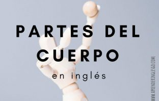 Partes del cuerpo en inglés - Cuerpo humano en inglés